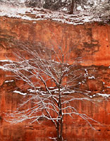 Winter Tree and Canyon, Oklahoma